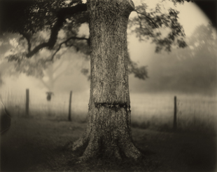 2753_Sally-Mann